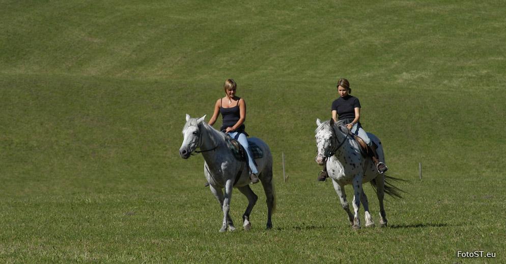 Andare a cavallo e trekking a cavallo in val pusteria for Immagini cavalli da disegnare
